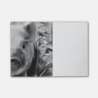 sweet piglet, black white post-it notes