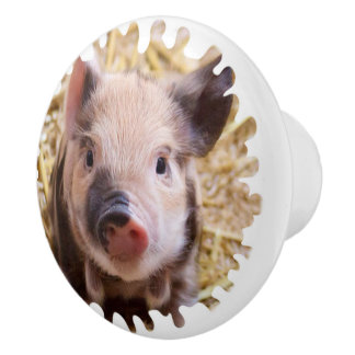 sweet piglet white mask ceramic knob