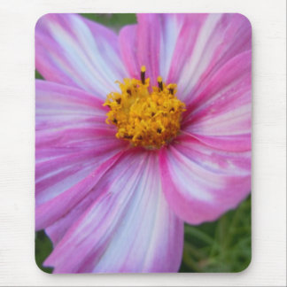 Sweet Pink and White Cosmo Mouse Pad