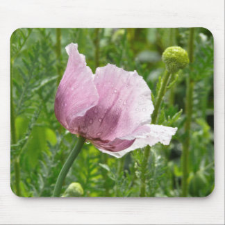 Sweet Pink Poppy with raindrops Mouse Pad