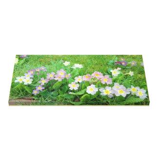 Sweet Primulas Canvas Print