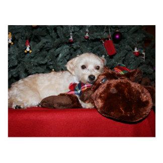 Sweet Puppy Christmas Postcard
