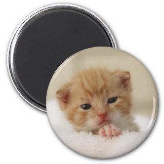 Sweet puppy kitty 6 cm round magnet
