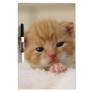 Sweet puppy kitty dry erase whiteboard