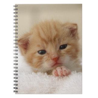 Sweet puppy kitty spiral notebook