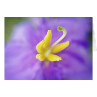 Sweet Purple Flower with Yellow Center Card