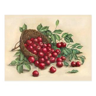 Sweet Red Cherries Postcard