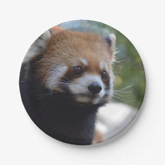 Sweet Red Panda Bear Paper Plate