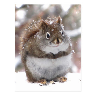 Sweet Red Squirrel Postcards