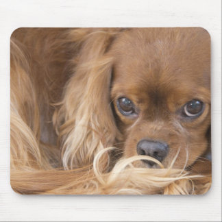Sweet Ruby Cavalier King Charles Spaniel Mouse Mats