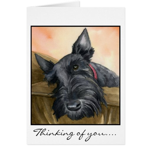 Sweet Scottie, Bailey... Greeting Cards