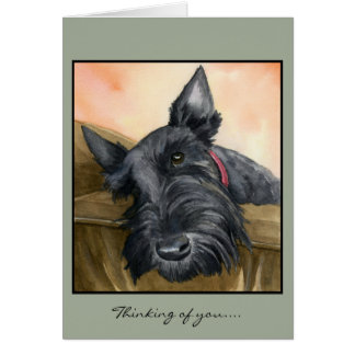 Sweet Scottie, Bailey... Card