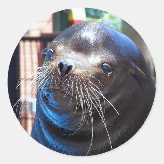 Sweet Sea Lion Classic Round Sticker
