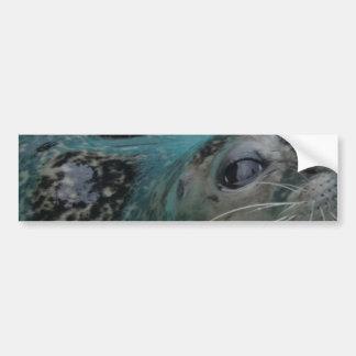 Sweet Seal Bumper Stickers