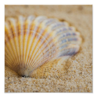Sweet Seashell Poster