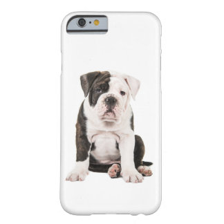 Sweet sitting English bulldog Barely There iPhone 6 Case