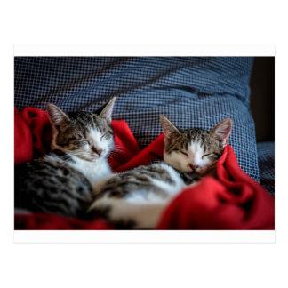 Sweet sleeping Kitties Postcard
