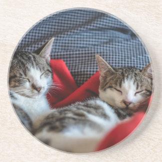 Sweet sleeping Kitties Sandstone Coaster