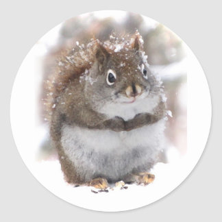 Sweet Squirrel Classic Round Sticker
