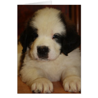 Sweet St. Bernard Puppy Card