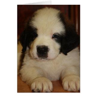 Sweet St. Bernard Puppy Greeting Card