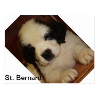 Sweet St. Bernard Puppy Postcard