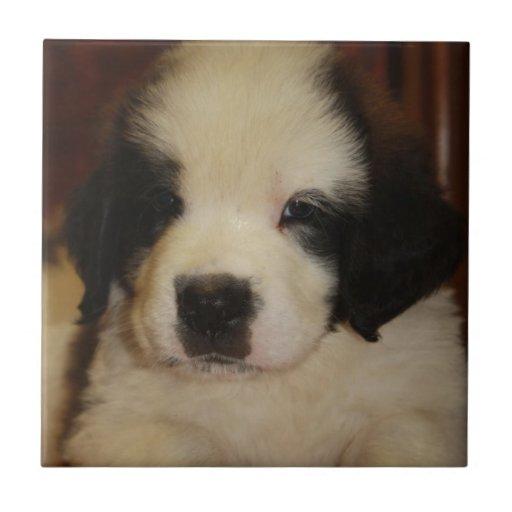 Sweet St. Bernard Puppy Tiles