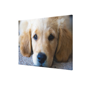 Sweet, Sweet Puppy Gallery Wrap Canvas