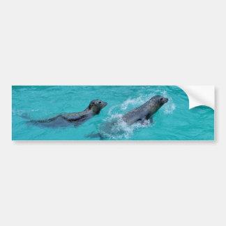 Sweet Swimming Seals Couple Bumper Sticker