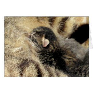 Sweet Tabby Time Greeting Card