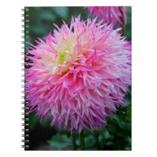 Sweet Temptation Spiral Note Book