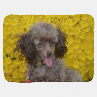 Sweet Tiny Brown Poodle Swaddle Blankets
