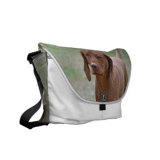 Sweet Vizsla Messenger Bags