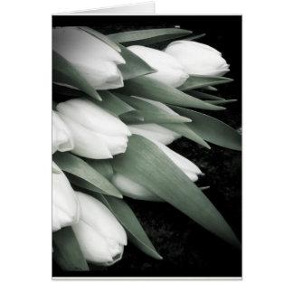 Sweet White Tulip Blank Greeting Card