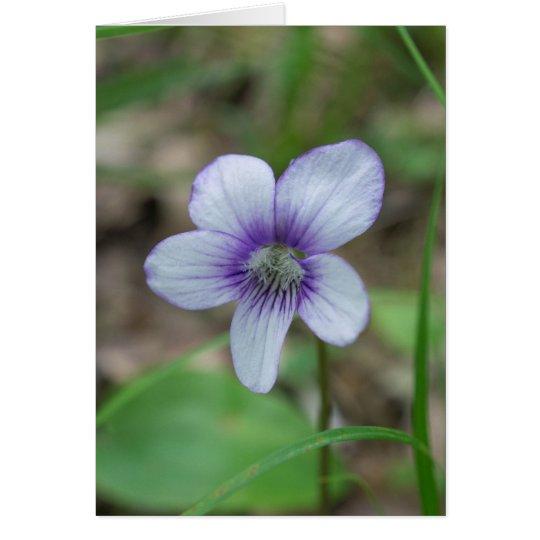 Sweet White Violet Wildflower Floral Card