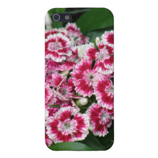 Sweet William Flowers Cases For iPhone 5