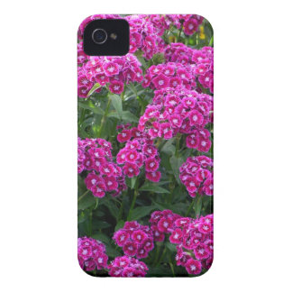 Sweet William in Bold Bloom Case-Mate iPhone 4 Case