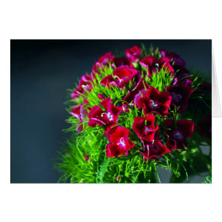 Sweet Williams flower card