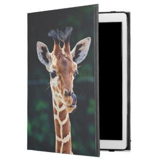 sweet young giraffe