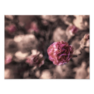 Sweetness Prints antiqued pink carnations