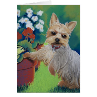 Sweetness Yorkie Card