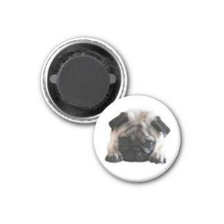 SweetPea Pugs Round Fridge Magnet