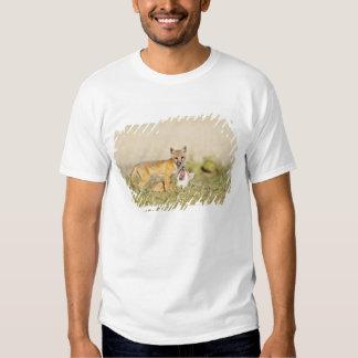 Swift Fox (Vulpes macrotis) young at den burrow, 4 Tshirt