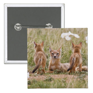 Swift Fox (Vulpes velox) female with young at 15 Cm Square Badge