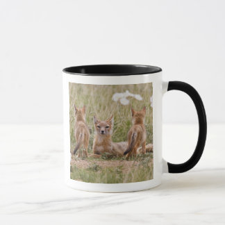 Swift Fox (Vulpes velox) female with young at Mug
