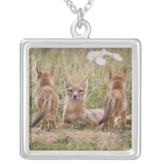 Swift Fox (Vulpes velox) female with young at Square Pendant Necklace