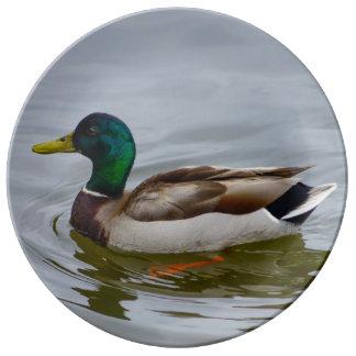Swim Mallard Swim Plate