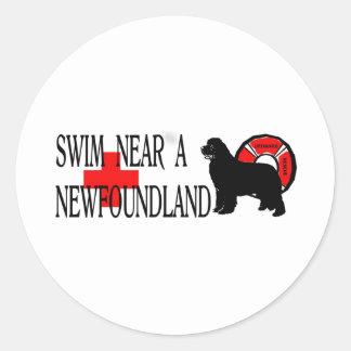 Swim near a Newfoundland Classic Round Sticker