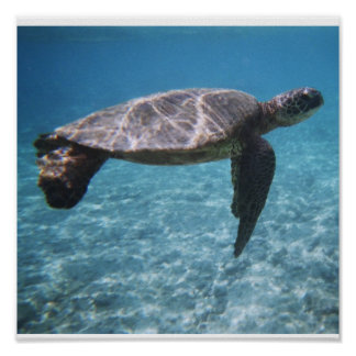 Swim with the turtle Poster