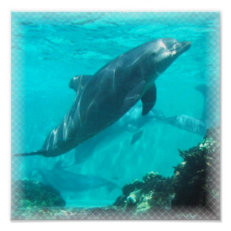 Swimming Dolphin Print
